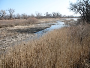 Invasive Phragmites Along The Platte River