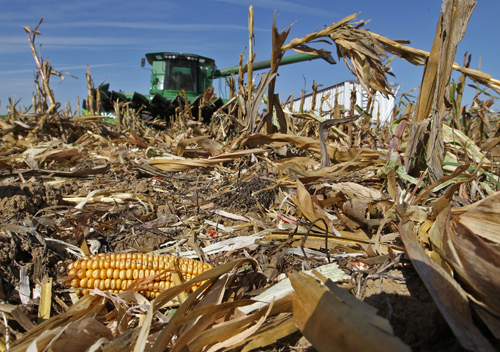 Curtis Adkins harvests corn in northwestern Missouri